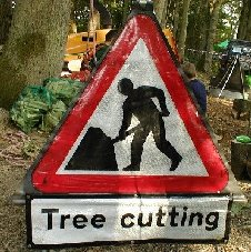 Tree Cutting in Progress